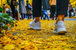 神宮外苑いちょう並木の銀杏と人々の足の写真素材 [FYI03440694]