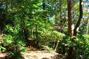 森林の写真素材 [FYI03440952]