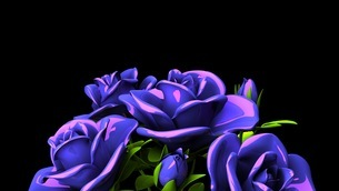 Blue Roses Bouquet On Black Text Spaceのイラスト素材 [FYI03440960]