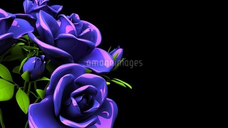 Blue Roses Bouquet On Black Text Spaceのイラスト素材 [FYI03440961]