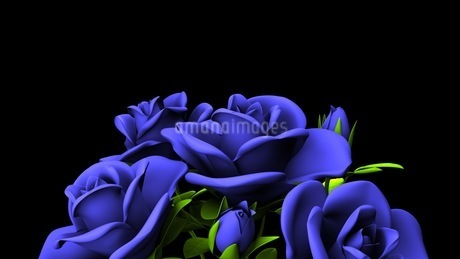 Blue Roses Bouquet On Black Text Spaceのイラスト素材 [FYI03440962]
