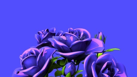 Blue Roses Bouquet On Blue Text Spaceのイラスト素材 [FYI03440964]