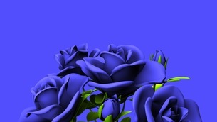 Blue Roses Bouquet On Blue Text Spaceのイラスト素材 [FYI03440966]