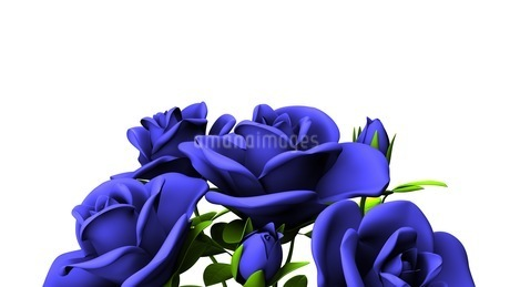 Blue Roses Bouquet On White Text Spaceのイラスト素材 [FYI03440970]