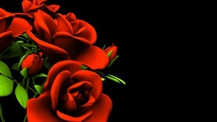 Red Roses Bouquet On Black Text Spaceのイラスト素材 [FYI03440975]