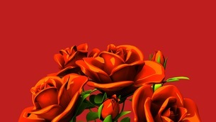 Red roses  bouquet on red text spaceのイラスト素材 [FYI03440976]