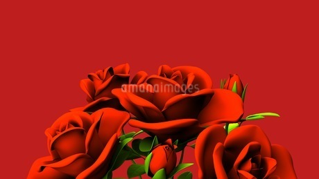 Red roses  bouquet on red text spaceのイラスト素材 [FYI03440978]