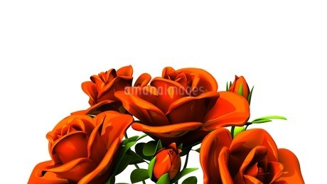 Red roses  bouquet on white text spaceのイラスト素材 [FYI03440980]