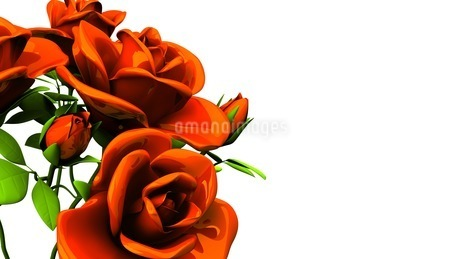 Red roses  bouquet on white text spaceのイラスト素材 [FYI03440981]