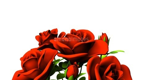 Red roses  bouquet on white text spaceのイラスト素材 [FYI03440982]