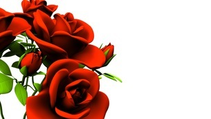 Red roses  bouquet on white text spaceのイラスト素材 [FYI03440983]