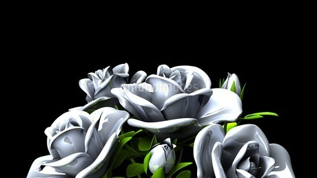 White Roses  Bouquet on Black Text Spaceのイラスト素材 [FYI03440994]