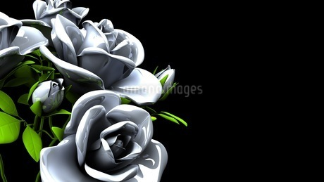 White Roses  Bouquet on Black Text Spaceのイラスト素材 [FYI03440995]