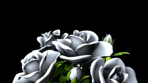 White Roses  Bouquet on Black Text Spaceのイラスト素材 [FYI03440996]