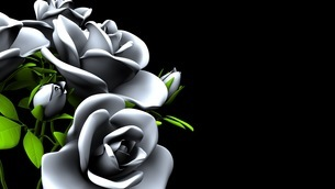 White Roses  Bouquet on Black Text Spaceのイラスト素材 [FYI03440997]