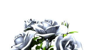 White roses  bouquet on white text spaceのイラスト素材 [FYI03440998]