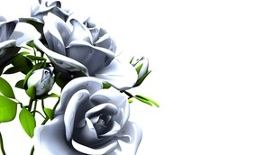 White roses  bouquet on white text spaceのイラスト素材 [FYI03440999]