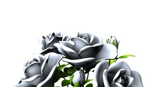 White roses  bouquet on white text spaceのイラスト素材 [FYI03441000]