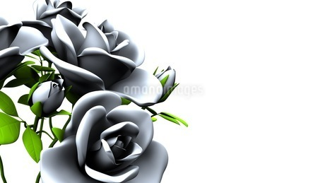 White roses  bouquet on white text spaceのイラスト素材 [FYI03441001]