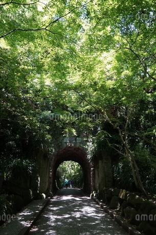 木漏れ陽の写真素材 [FYI03441014]