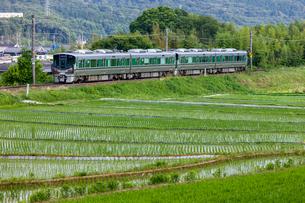 JR西日本、和歌山線の写真素材 [FYI03441142]