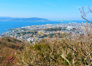 須磨浦山上梅林より明石海峡大橋を望むの写真素材 [FYI03441220]