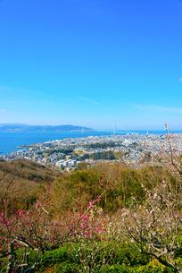 須磨浦山上梅林より明石海峡大橋を望むの写真素材 [FYI03441221]