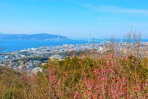 須磨浦山上梅林より明石海峡大橋を望むの写真素材 [FYI03441223]