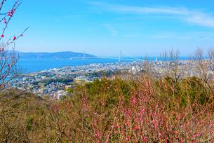 須磨浦山上梅林より明石海峡大橋を望むの写真素材 [FYI03441226]