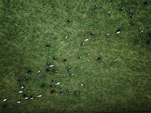 牧場の空撮の写真素材 [FYI03441257]