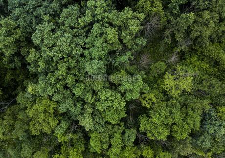 森の空撮の写真素材 [FYI03441259]