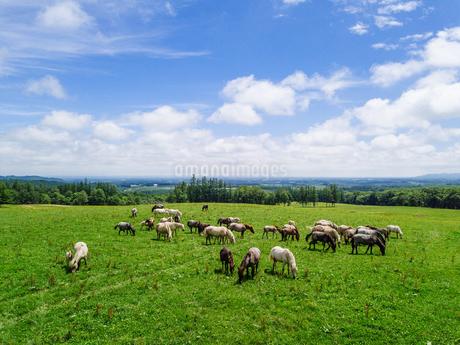 牧場の空撮の写真素材 [FYI03441267]