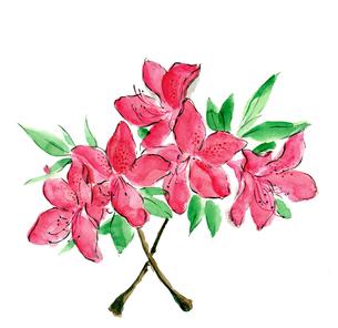 水彩 躑躅 ツツジ 花のイラスト素材 [FYI03441336]