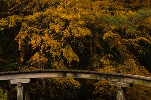 栗林公園 黄色の楓の木と橋の写真素材 [FYI03441401]