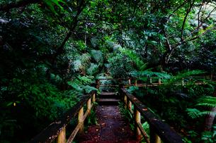 ジャングルの道の写真素材 [FYI03442106]