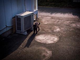 室外機のそばに黒猫の写真素材 [FYI03442514]
