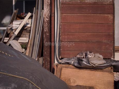 戸袋の前でのんびり佇む猫の写真素材 [FYI03442516]