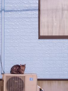 室外機の上でくつろぐ猫の写真素材 [FYI03442517]
