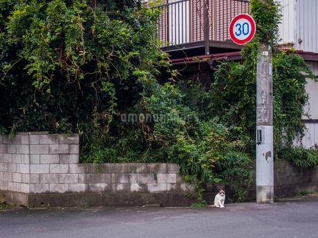 雑草に覆われる空き家と佇む猫の写真素材 [FYI03442526]