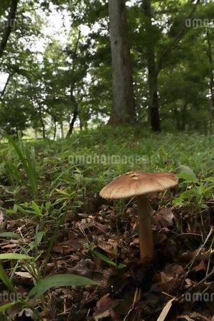 森のキノコの写真素材 [FYI03442742]