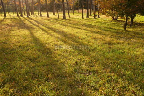 逆光の草地に伸びる木立の影の写真素材 [FYI03442767]