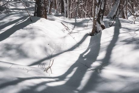 福島県 裏磐梯 地面に雪が積もっている様子の写真素材 [FYI03443356]