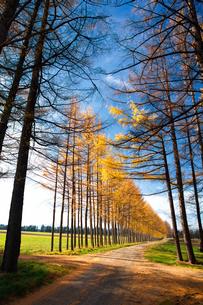 カラ松の防風林の写真素材 [FYI03443375]