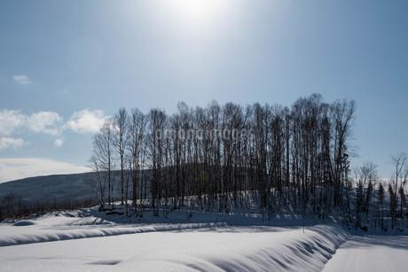 冬晴れの空の太陽と雑木林の写真素材 [FYI03443423]