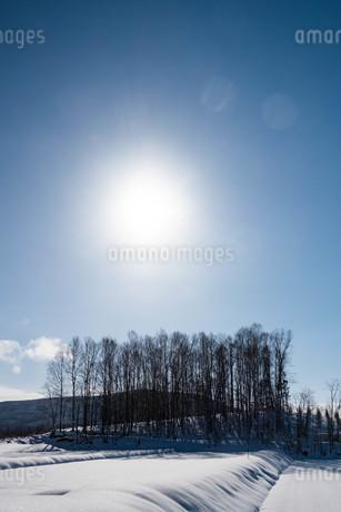 冬晴れの空の太陽と雑木林の写真素材 [FYI03443424]