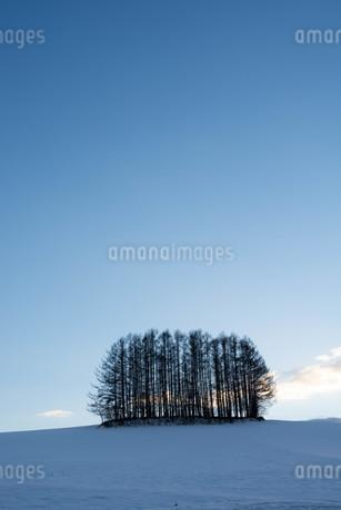 冬の夕暮れの空とカラマツ林 美瑛町の写真素材 [FYI03443429]
