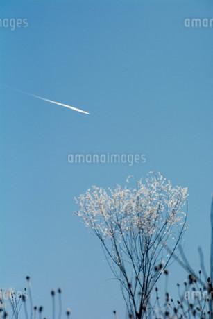 冬の寒い朝の飛行機雲の写真素材 [FYI03443430]
