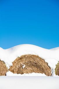 雪をかぶったムギロールの写真素材 [FYI03443436]