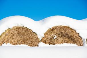 雪をかぶったムギロールの写真素材 [FYI03443437]