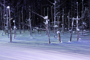 ライトアップされた冬の湖 美瑛町の写真素材 [FYI03443440]